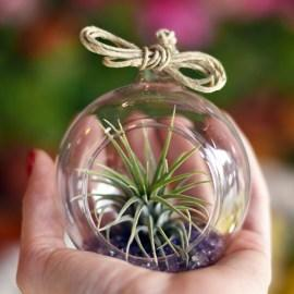 gift_airplant4