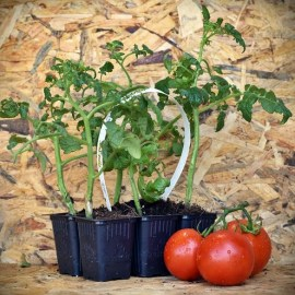 tomato_pack